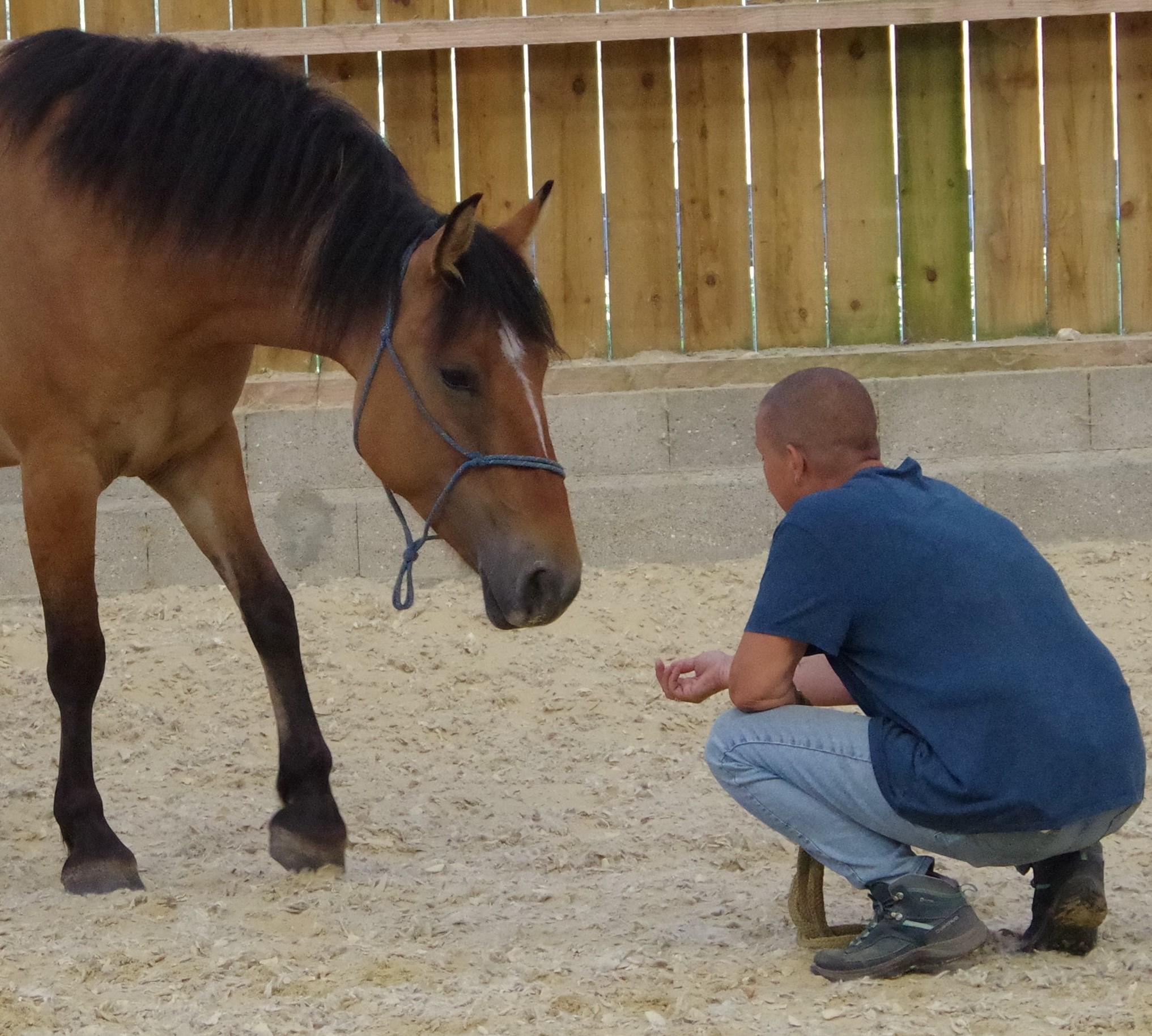 Comment et pourquoi le cheval a changé ma vie ?