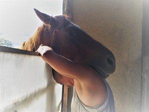 Communiquer avec le cheval 3