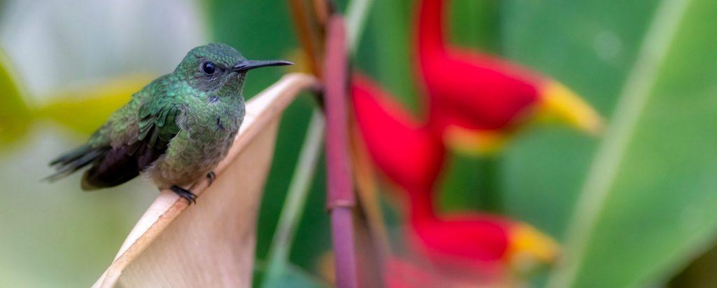 faire sa part de colibris